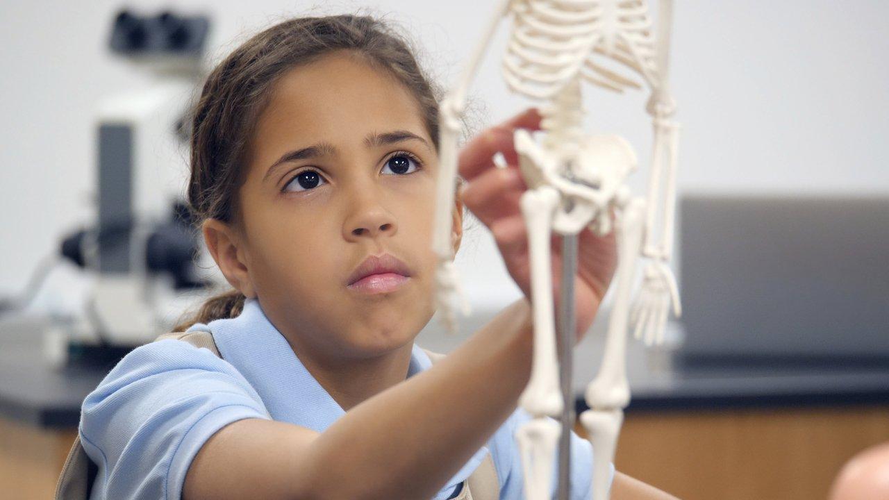 Aluna do Ensino Fundamental 1 examina modelo de esqueleto humano em tamanho pequeno em sala de aula