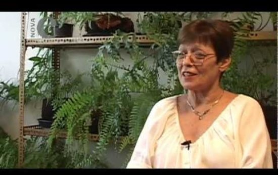 Telma Weisz: A importância do estudo para os alfabetizadores