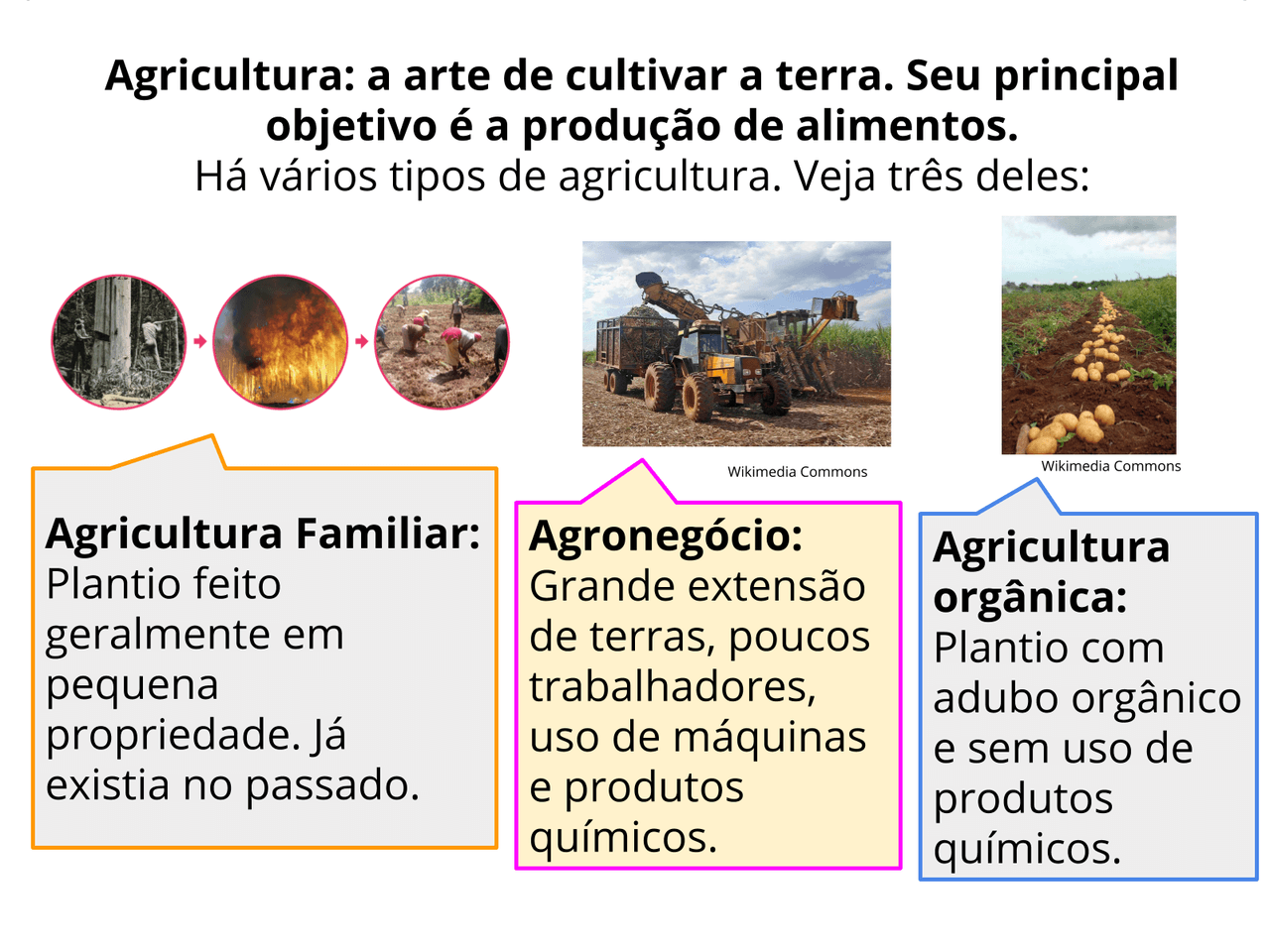 Desafios para a agricultura do Brasil no passado e no presente