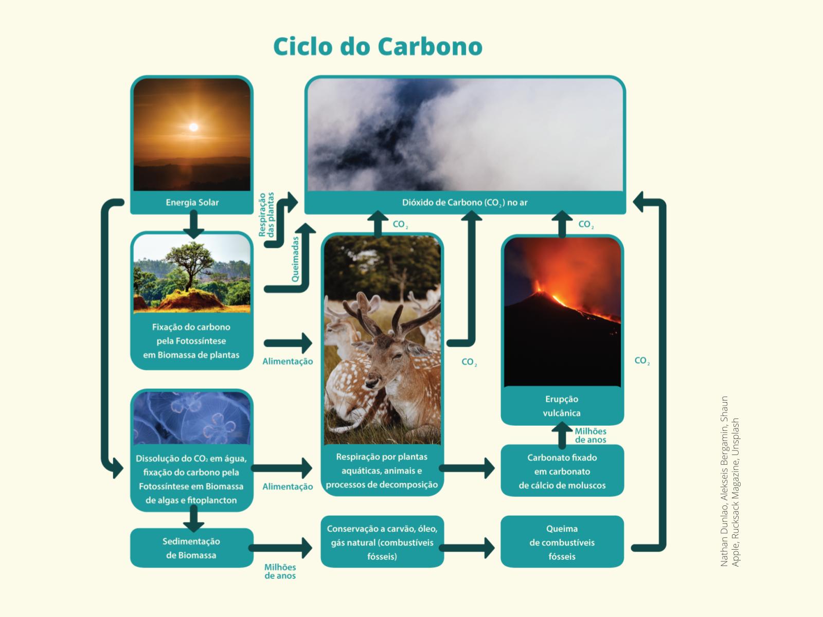Sequestro de carbono