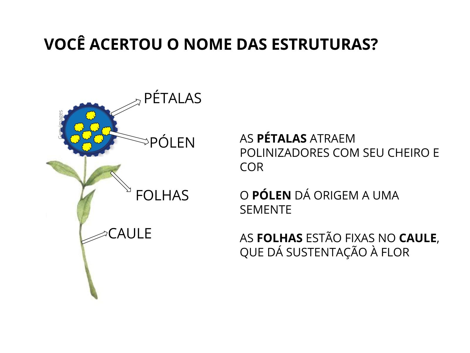 Características das flores