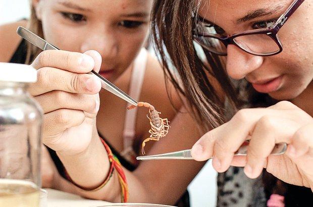 Escorpiões coletados pelos alunos em casa e na rua foram analisados na classe. Marina Piedade