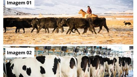 Pecuária extensiva e pecuária intensiva