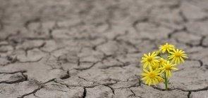 Flores amarelas brotam em meio à terra seca em uma alegoria para resiliência