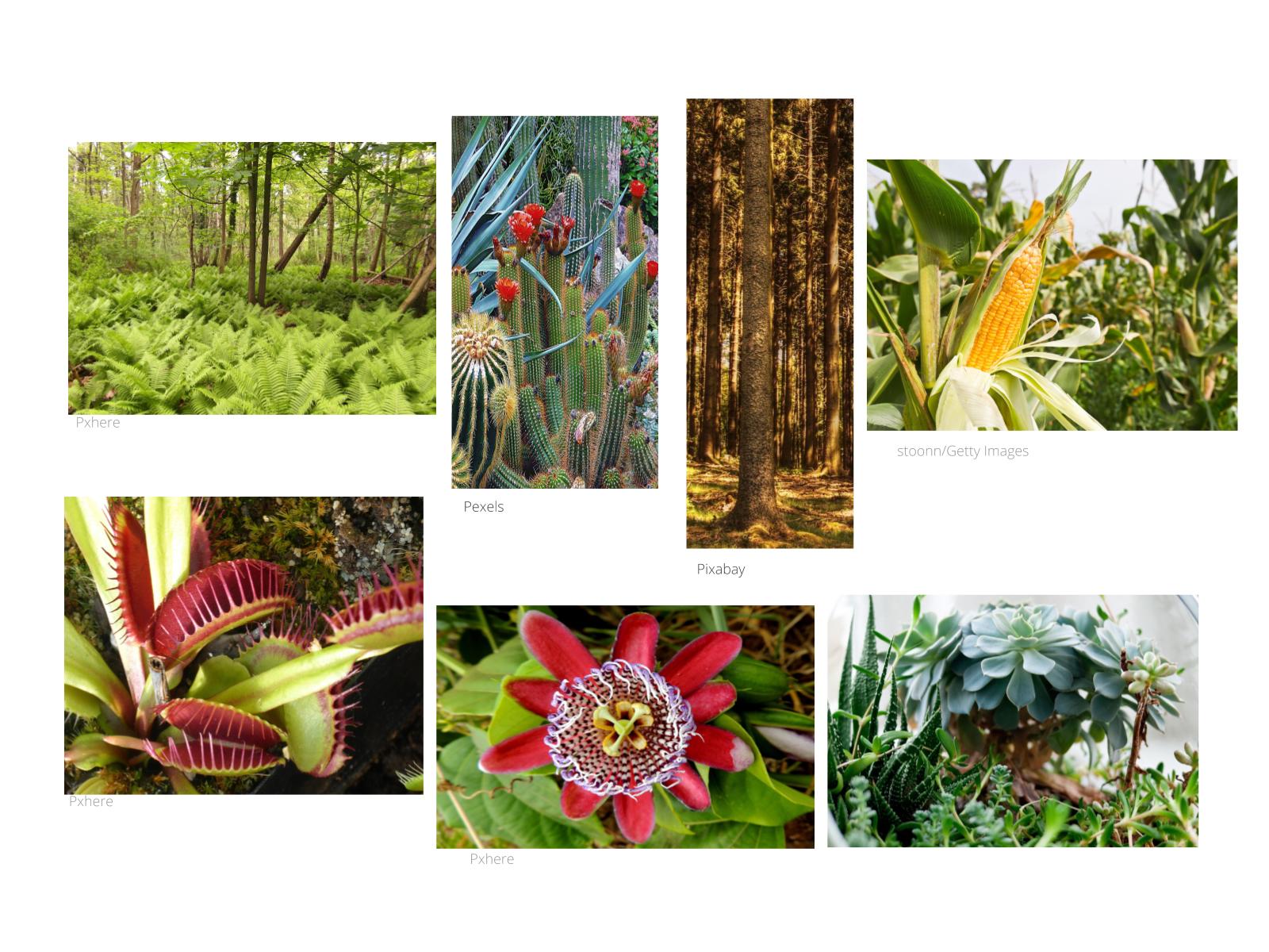 O MUNDO DAS PLANTAS: QUAIS EU CONHEÇO?