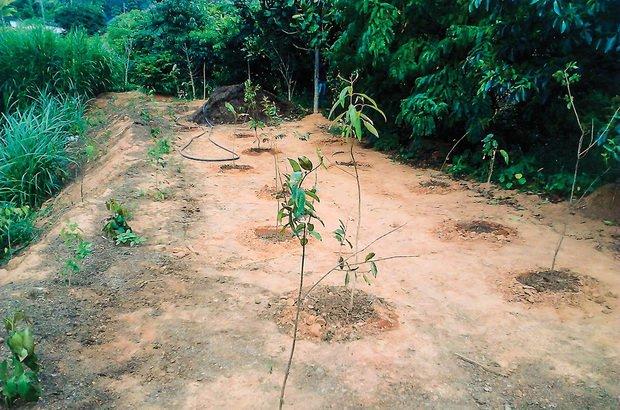 Outra medida prática adotada pelos jovens foi o plantio de mudas de espécies nativas. Arquivo pessoal/Rafael Pereira Machado