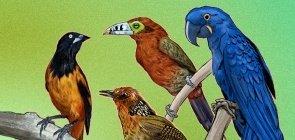 14 recursos gratuitos com tudo sobre aves