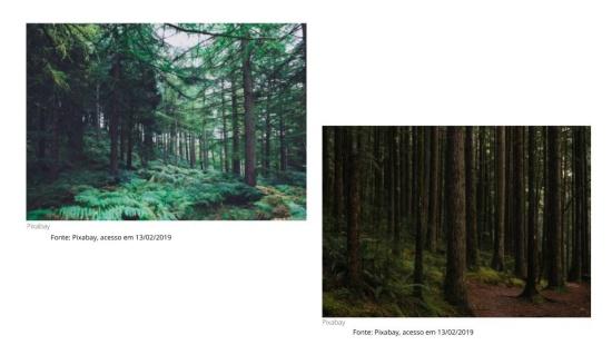 Domínios morfoclimáticos: Floresta de Coníferas ou Boreal (Taiga)