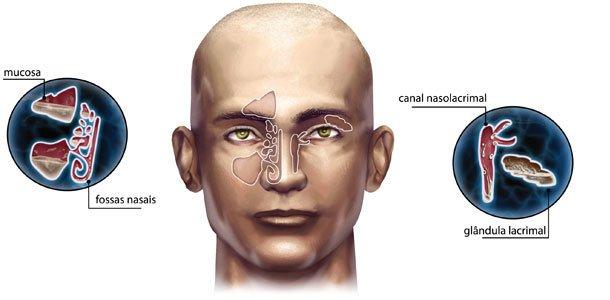 Por que o nariz escorre quando estamos gripados ou choramos? Ilustração Aluísio Cervelle Santos e consultoria Luiz Iria