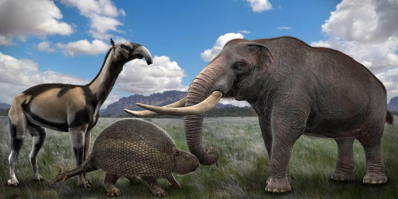 Da esquerda para a direita: xenorinotério, gliptodonte e mastodonte | Crédito: Rodolfo Nogueira/ Megafauna