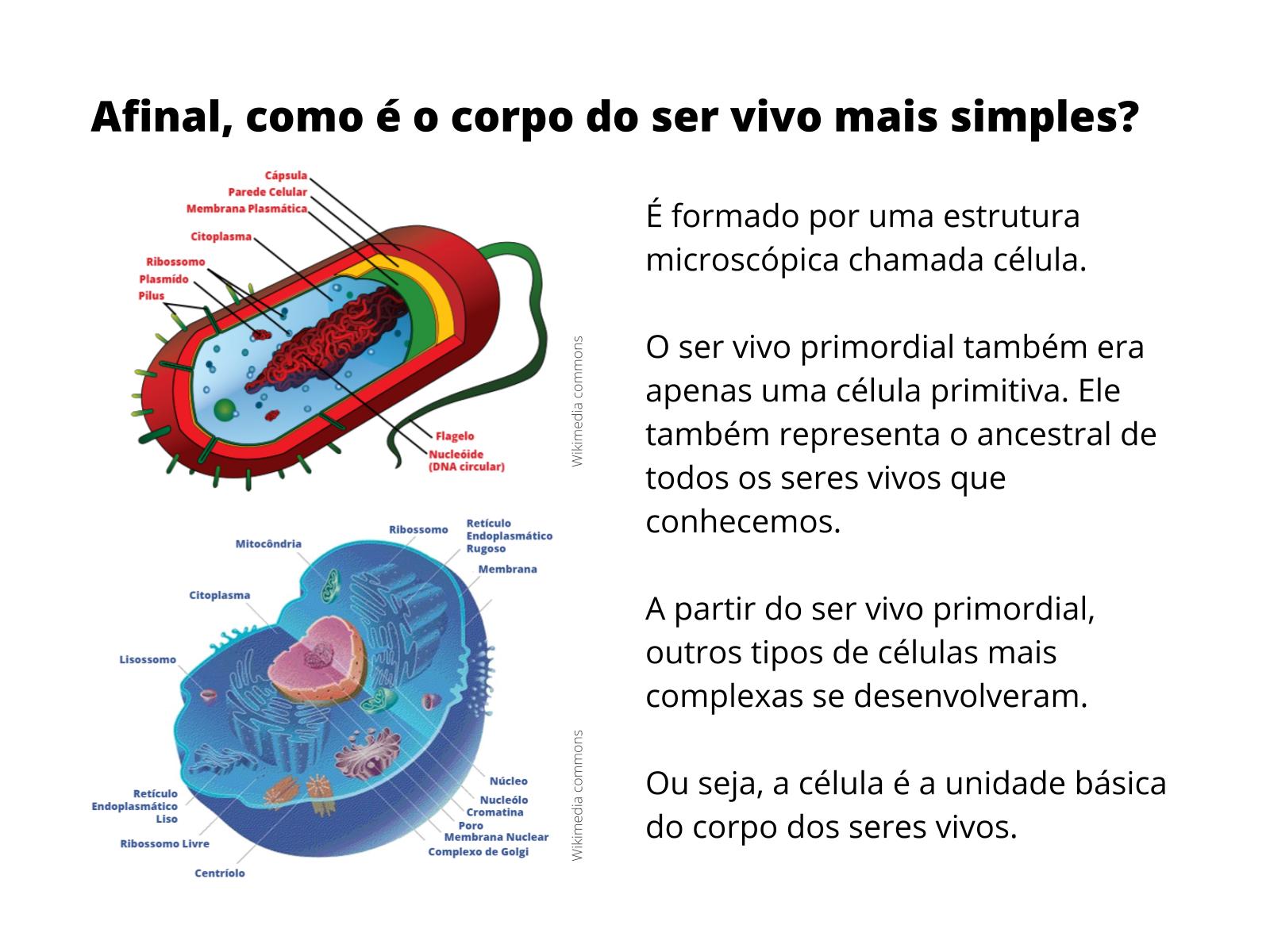 Célula: a unidade básica do corpo dos seres vivos