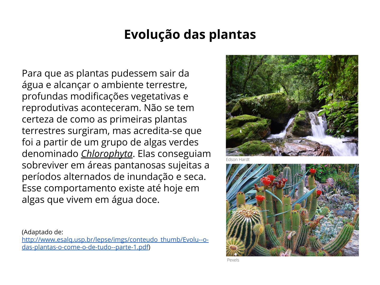 Reprodução das plantas e sua relação com a conquista do ambiente terrestre