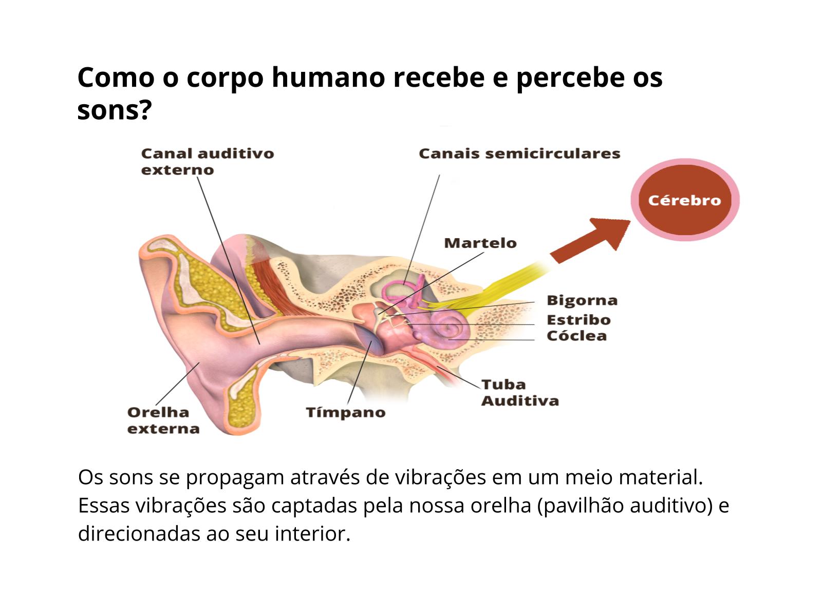 A recepção do som pelo corpo humano
