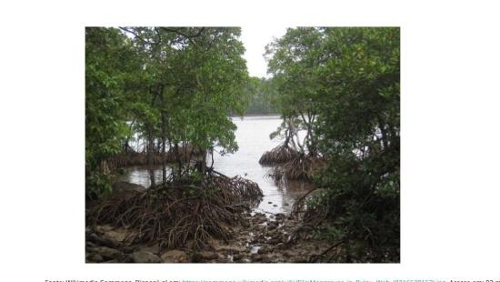 Ásia: a necessária conservação dos manguezais
