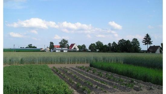 Práticas agrícolas e conservação do solo