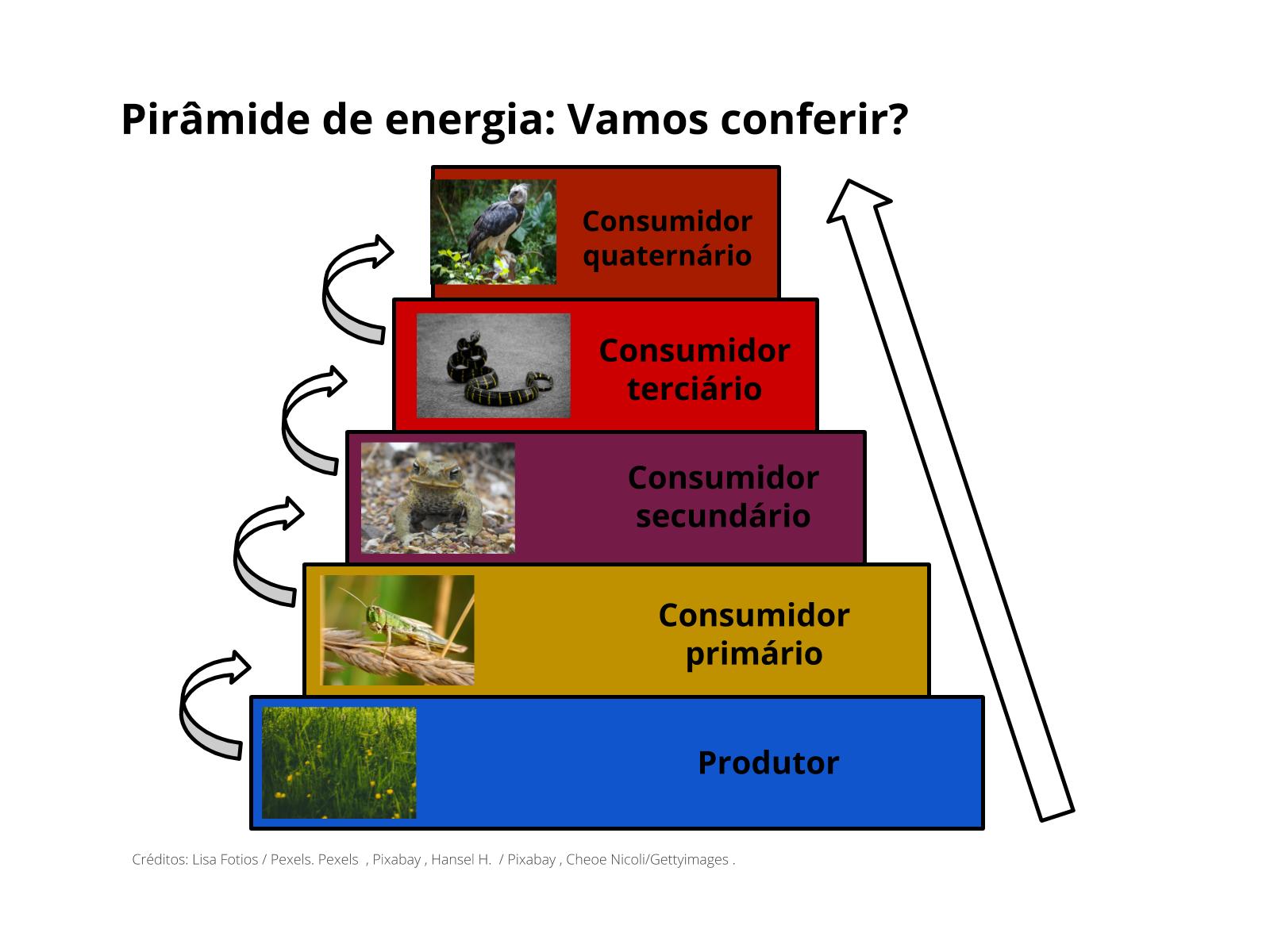 Pirâmide ecológica de energia: o fluxo de energia nas cadeias alimentares
