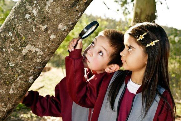 Observação de árvores