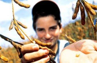 Semeando curiosidade: estudantes vão conhecer a soja, que se estabeleceu no planalto gaúcho como a cultura dominante voltada à exportação Foto: Edson Vara