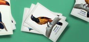 EXTRA: Jogo da memória das aves brasileiras
