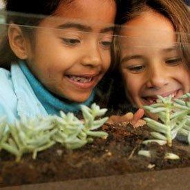 Observação: alunas da 2ª série da escola Alfredo Paulino, em São Paulo, acompanham o desenvolvimento das plantas e animais. Foto: Kriz Knack