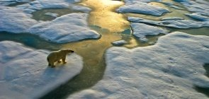Edição 318 - mudanças climaticas