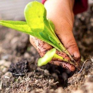 Crianças plantam vegetais na horta da escola