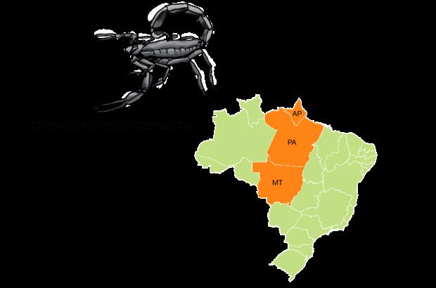 Quando adulto, possui uma coloração negra e pode chegar a 9 centímetros de comprimento, mas quando jovem tem o corpo castanho, com manchas escuras. Embora possa ser encontrado no Mato Grosso, é mais comum na região Norte. Por isso recebe o nome de escorpião preto da Amazônia.