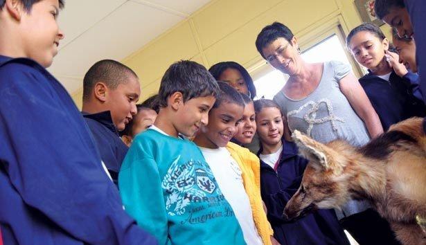 OBSERVAÇÃO ATENTA Alunos da EMEF Laura Suriani Barbuio analisam durante a aula um lobo-guará empalhado Foto: Raoni Madalena
