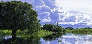 Árvore à beira de rio do pantanal com céu azul se refletindo na água