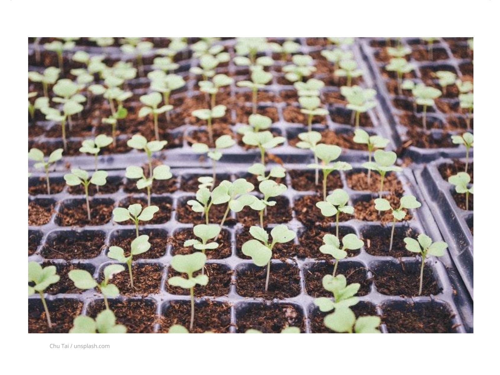 Solos e o Plantio