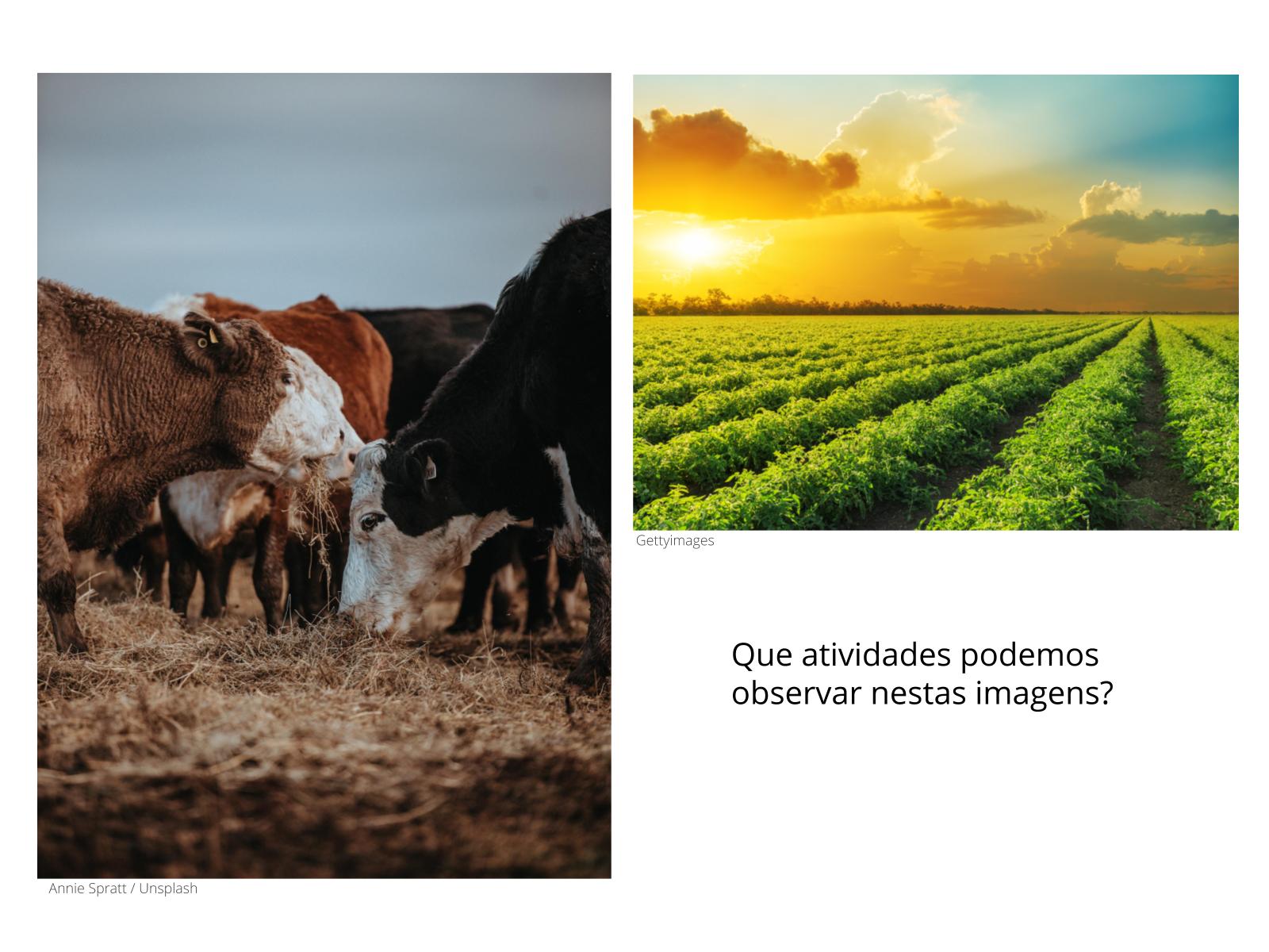 O solo na agricultura e na pecuária