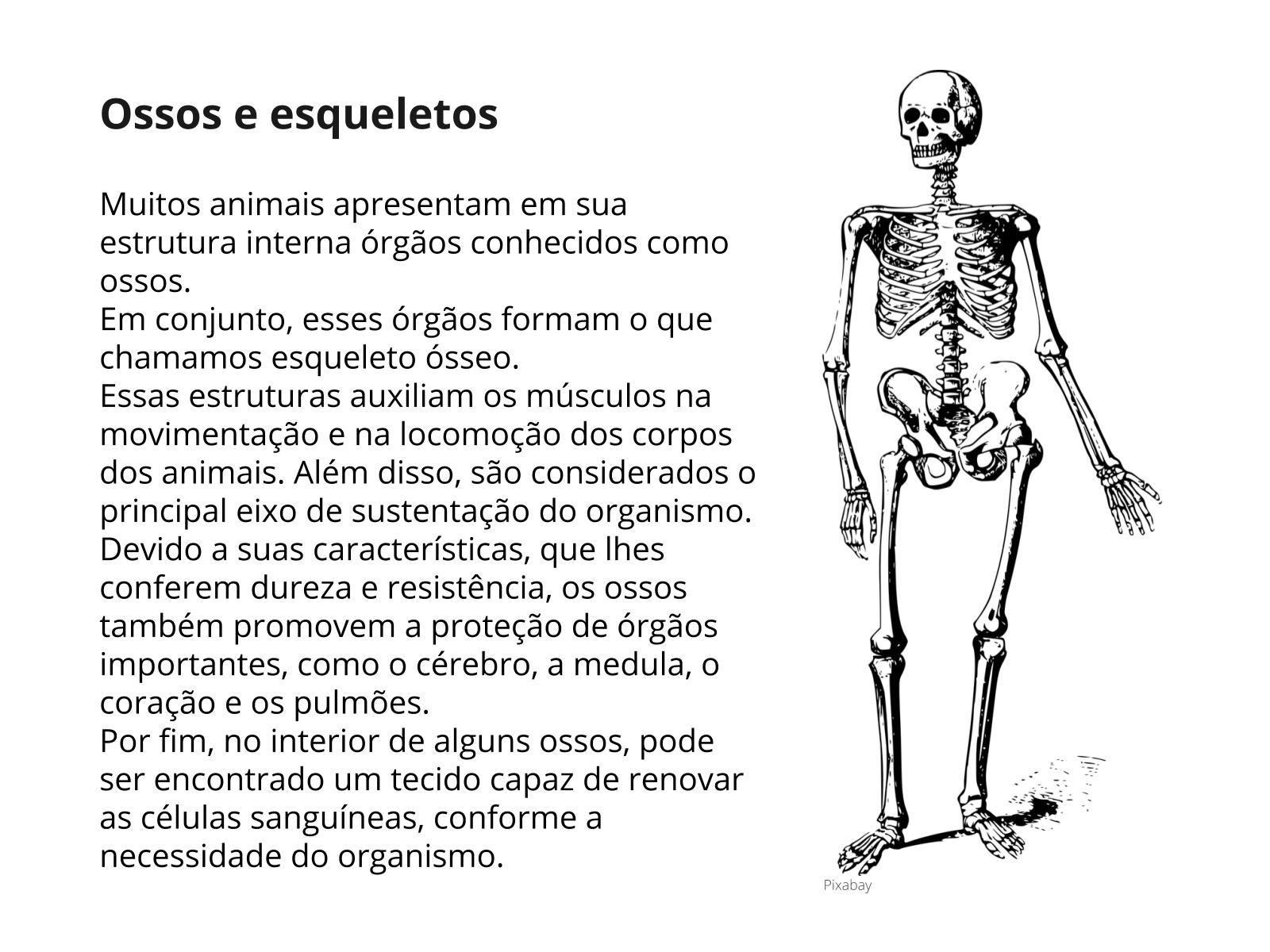 Conhecendo o sistema ósseo