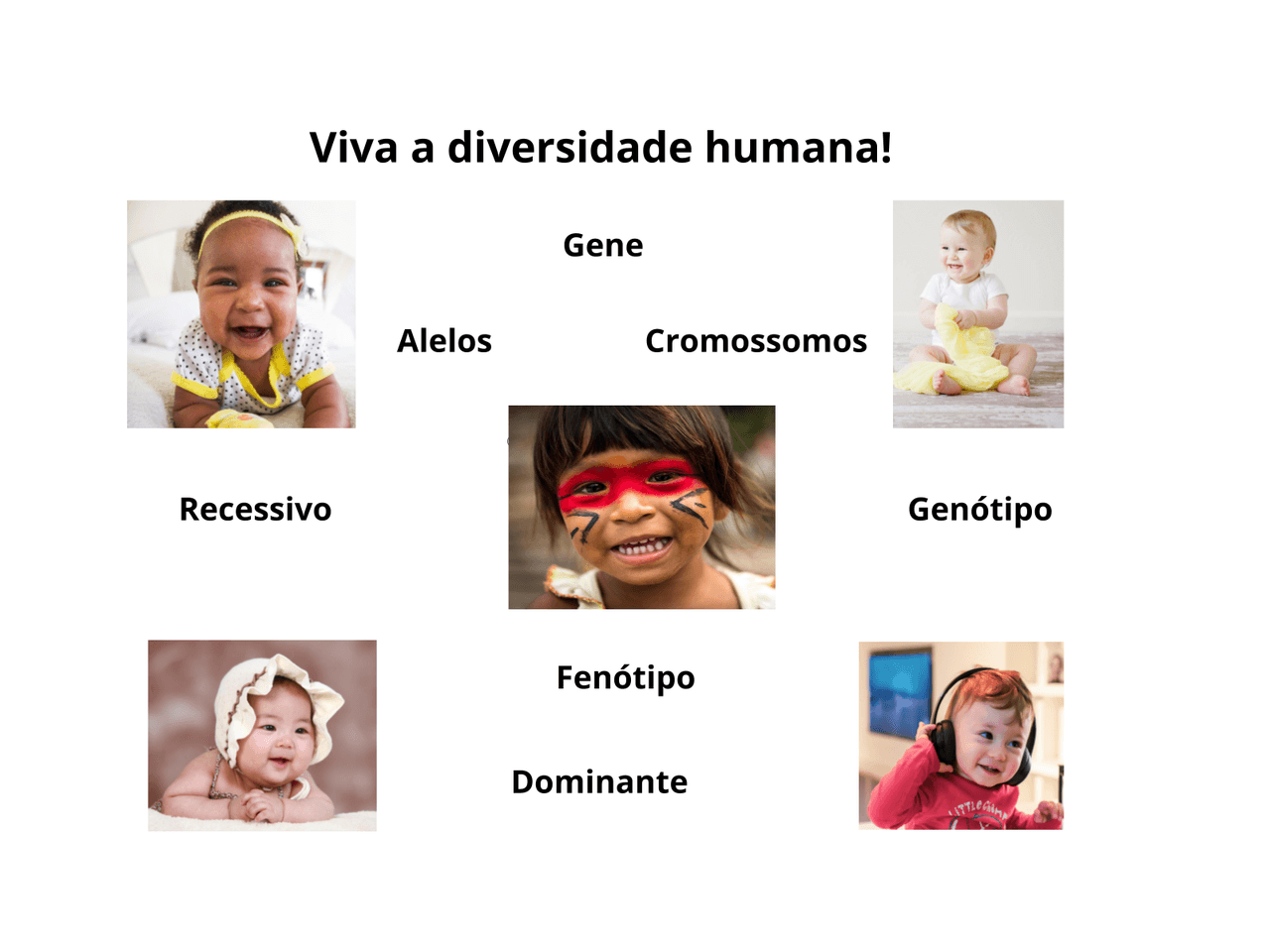 Os genes e as características hereditárias