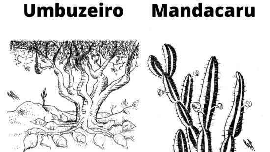 A Caatinga, biodiversidade e sociedade