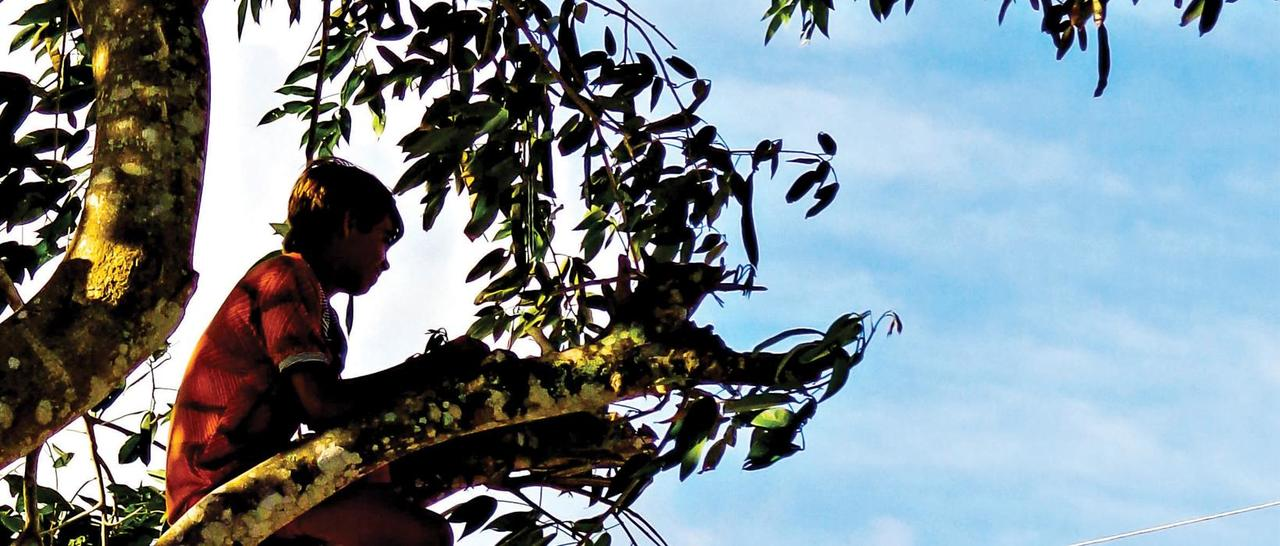 A nova história dos velhos quilombos